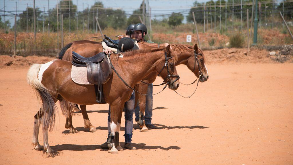 Les chevaux de l'IMH. (Crédit : Luke Tress/Times of Israël)