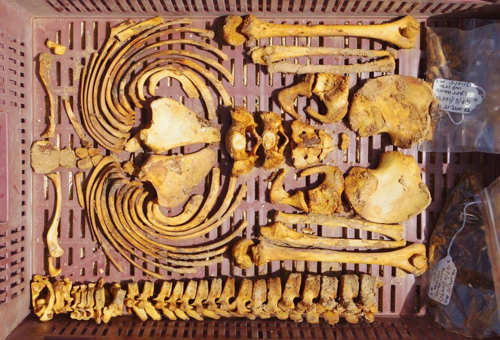 Les bras et le torse d'un squelette d'un adolescent du Cimetière des Tombes du Nord (Crédit : Mary Shepperson / Autorisation du projet Amarna)