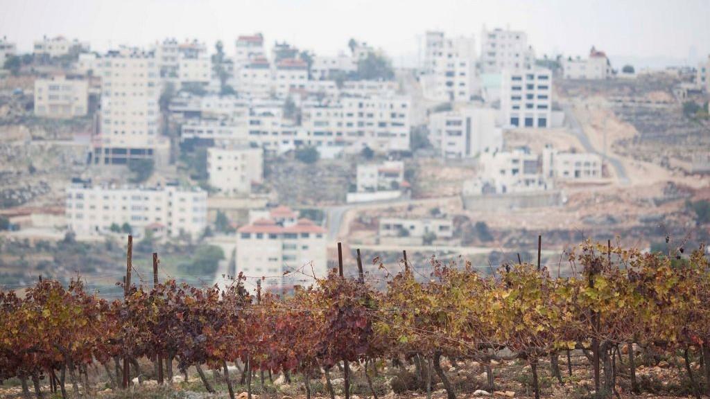Une vue des vignes de Psagot en Cisjordanie à proximité de la ville de Ramallah le 13 décembre 2012 (Crédit :  Yonatan Sindel/Flash90)