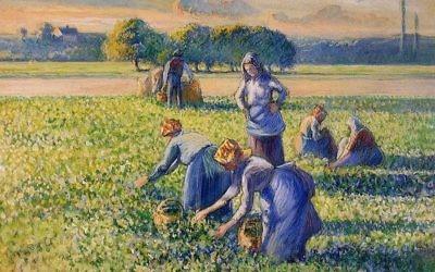 La cueillette des pois. Tableau de Camille Pissarro de la collection Simon Bauer spoliée durant la Seconde guerre mondiale. (Crédit : domaine public)