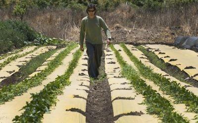 Dotan Goshen, propriétaire d'une ferme bio dans le kibboutz d'Hamaapil, dans le centre d'Israël, le 8 mai 2017. (Crédit: Jack Guez/AFP)
