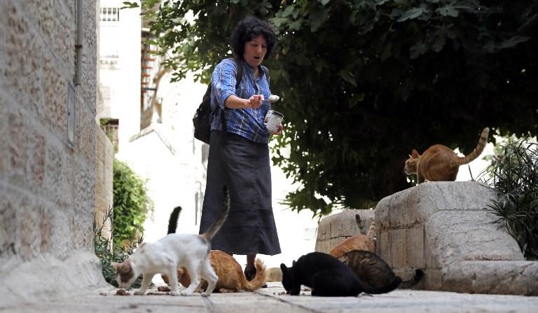 Tova Saul, Juive orthodoxe, nourrit les chats des rues de la Vieille Ville de Jérusalem, le 12 juillet 2017. (Crédit : Thomas Coex/AFP)