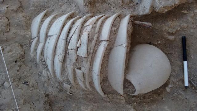 Morceaux de poterie retrouvés sur le site d'el-Araj, à Bethsaïde, en 2016. (Crédit: autorisation du Dr Mordechai Aviam)