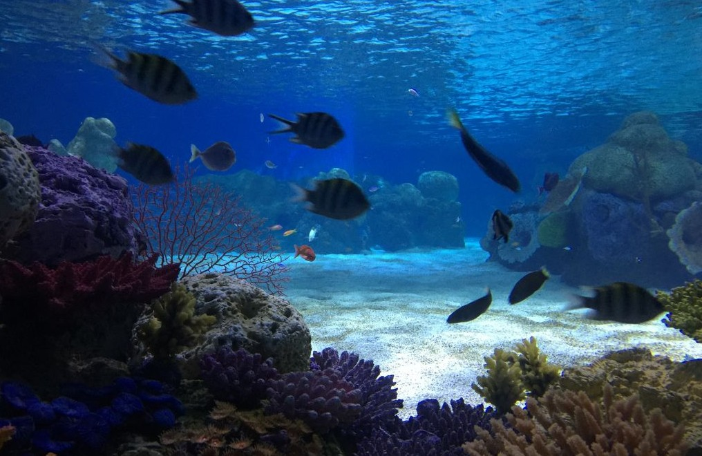 L'aquarium de Jérusalem présentera des espaces réservés aux poissons dans un grand nombre d'aquariums. Les autres animaux marins s'acclimatent en zone de quarantaine. (Crédit : Jessica Steinberg/Times of Israël)