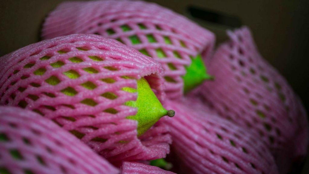 Des Etrogs emballés pour les protéger des éraflures (Crédit : Michal Fattan)