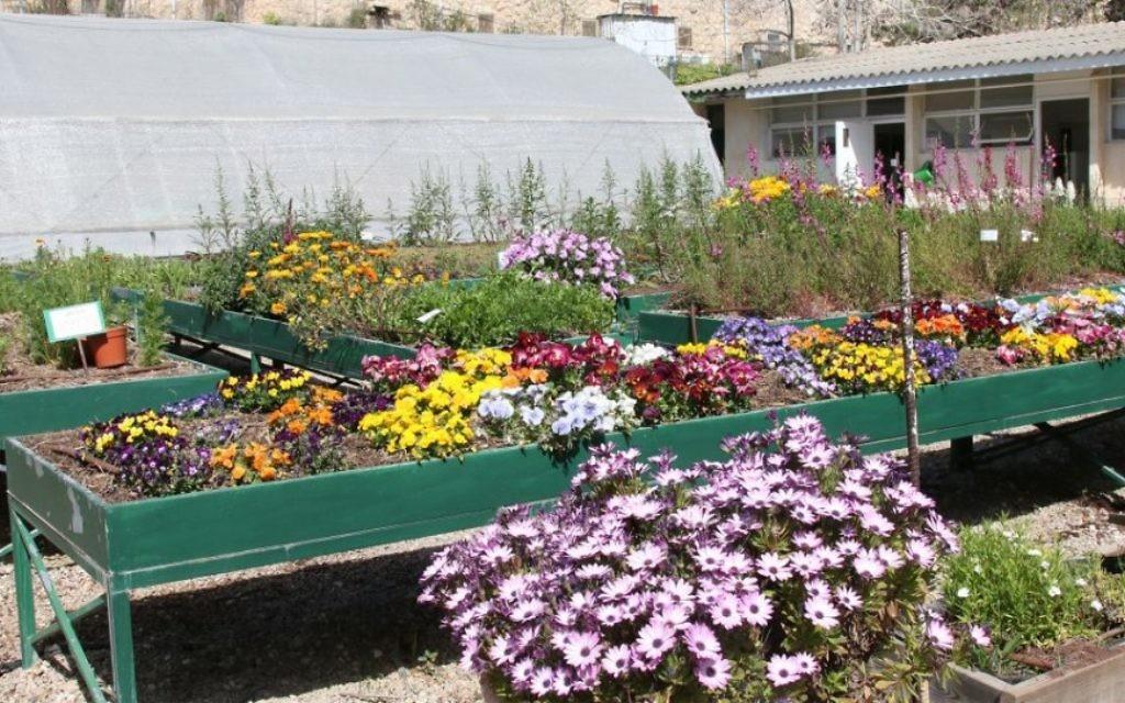 Le projet Alut met en relation des jeunes autistes avec des bénévoles pour travailler dans les jardins. (Crédit : Shmuel Bar-Am)