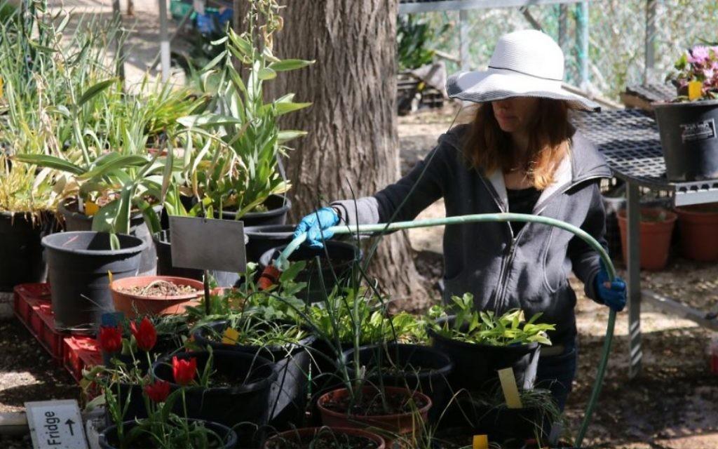 La Terrasse Géophyte rassemble les fleurs les plus exceptionnelles du jardin. (Crédit : Shmuel Bar-Am)