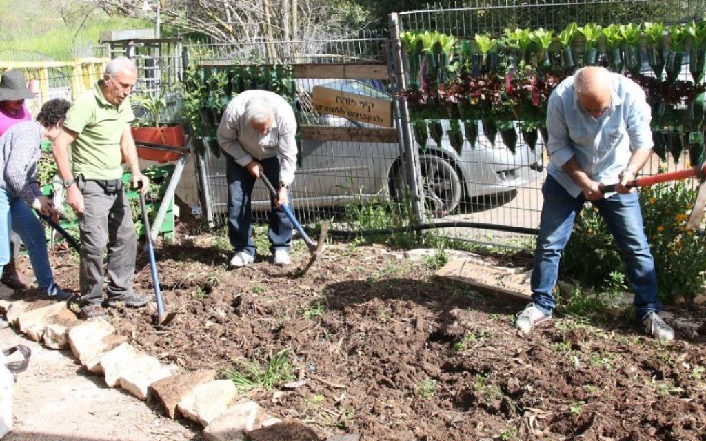 Le club des bénévoles du jardin étudient et travaillent pour des projets deux fois par semaine. (Crédit : Shmuel Bar-Am)
