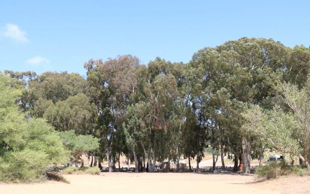 Un lieu pour pique-niquer près du Kibbutz Nitzanim. La région accueille maintenant une réserve naturelle. (Crédit : Shmuel Bar-Am)