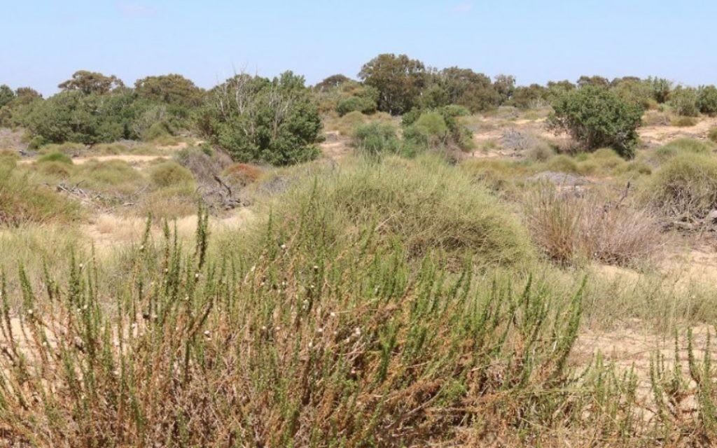 Les visiteurs peuvent faire de la randonnée dans les dunes de sable dans la région de Nitzanim dans sud (Crédit : Shmuel Bar-Am)