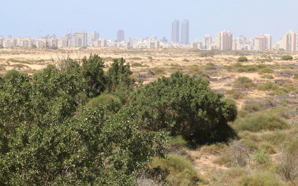 Des dunes de sable étendues dans une réserve naturelle près du littoral dans le sud d'Israël (Crédit : Shmuel Bar-Am)