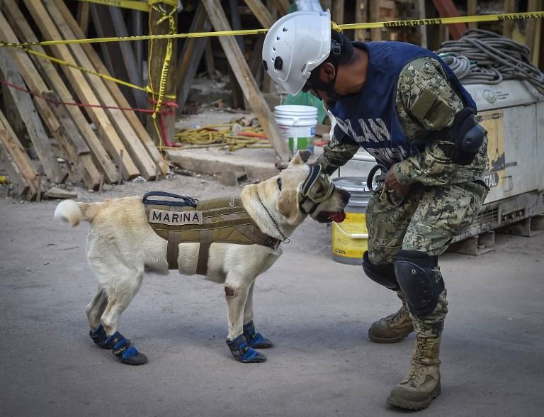 Frida, chienne de secours de la Marine mexicaine, avec son maître Israel Arauz Salinas, près des décombres de l'école Rebsamen de Mexico, le 22 septembre 2017. (Crédit : Omar Torres/AFP)
