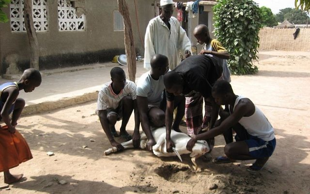 Abattage rituel d'un mouton pour la fête musulmane de l'Aïd al-Adha, au Sénégal. Illustration. (Crédit : Dorothy Voorhees/CC BY-SA 2.0/WikiCommons)