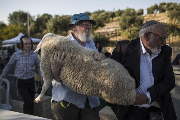 """L'ancien terroriste de la résistance juive Yehuda Etzion transporte un mouton pour la cérémonie de """"pratique"""" du sacrifice de Pessah à Beit Orot, à Jérusalem-Est, le 18 avril 2016 (Crédit : Hadas Parush/Flash90)"""