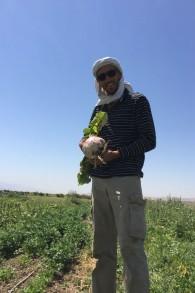 Dans le champs bio de Sde Eliahou en hiver (les champs sont encore verts) après la récolte d'un navet bio aux dimensions imposantes