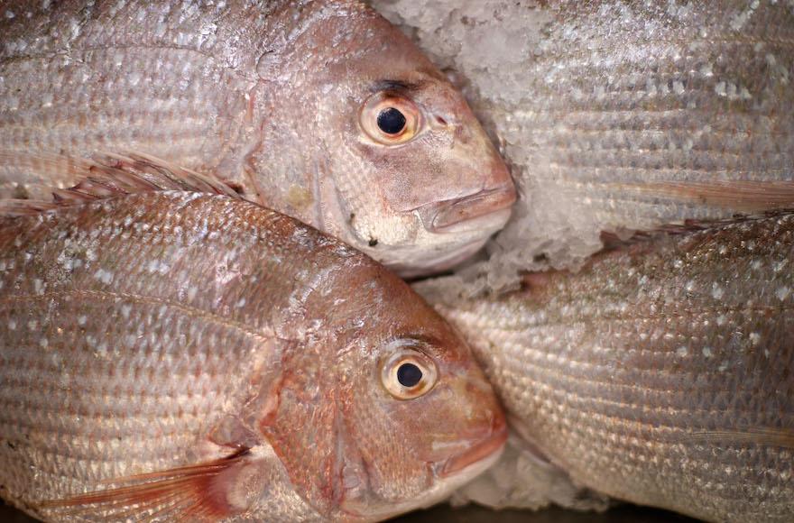 La dorade est un choix possible dans la préparation de Pesce al'Ebraica. (Crédit : Fiona Goodall/Getty Images/via JTA)