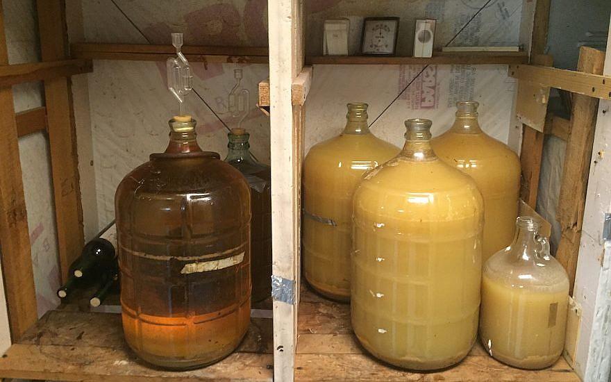 Le vin fabriqué par Jiji vient d'une vigne unique qui mesure plus de 30 mètres. (David Klein via JTA)