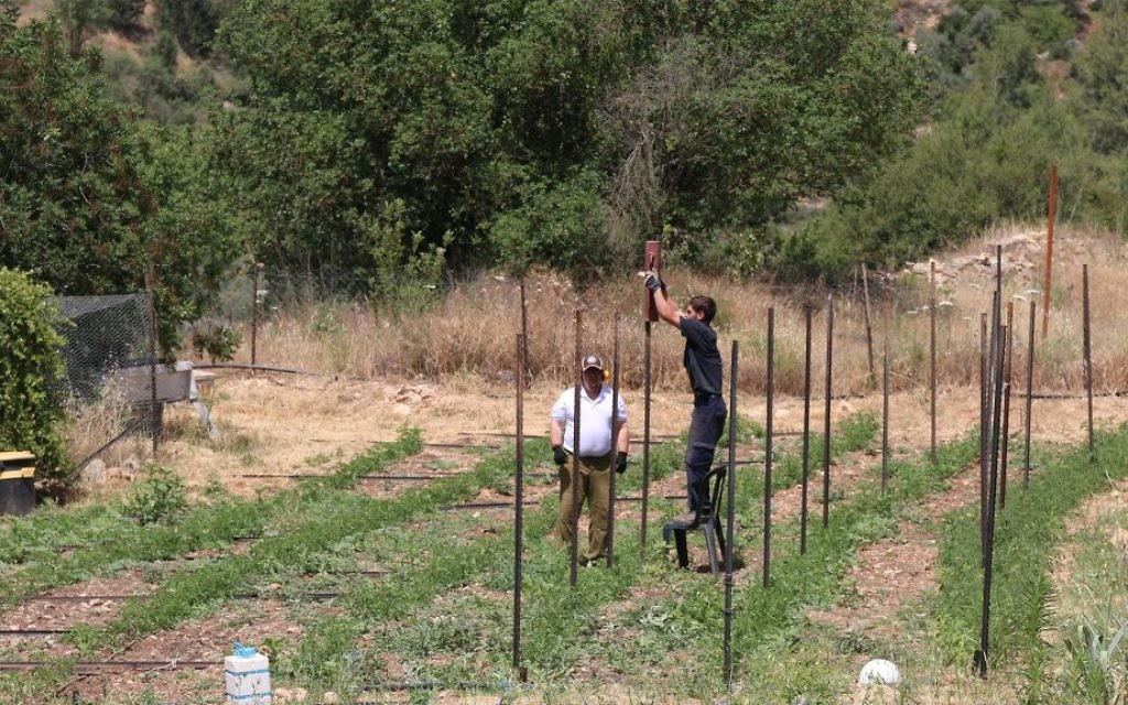 Travaux dans les champs de la ferme Kaima proche de Jérusalem. (Crédit : Shmuel Bar-Am)