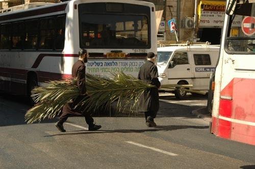 L'une des images de Soukkot de Yehoshua Halevi, qu'il aidera les photographes en herbe à retrouver pendant son atelier de Soukkot (Autorisation : Yehoshua Halevi)