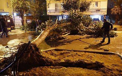 Des troncs d'arbres tombés bloquent les routes à Netanya, au nord de Tel Aviv, pendant une tempête, le 18 janvier 2018. (Crédit : AFP / JACK GUEZ)