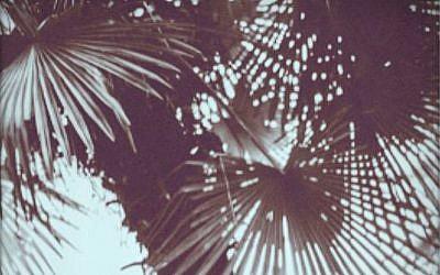 Capture d'écran de la présentation de l'exposition Eden, Eden à la Maître Albert Gallery à Paris, jusqu'au 10 février 2018 (Capture d'écran Facebook Maître Albert Gallery)