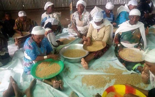 Les femmes éthiopiennes de Gondar trient le blé en préparation de la fabrication de la matsa (Crédit : Autorisation lutte pour l'Alyah éthiopienne)