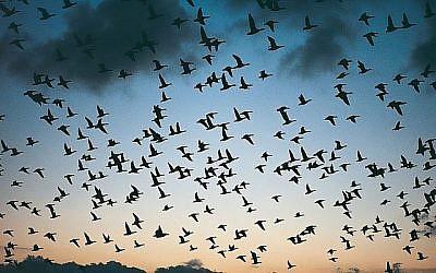 Une volée d'oiseaux (Ocs_12, iStock by Getty Images)
