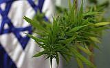 Un plant de cannabis a été amené à la Knesset en 2009 pour le comité travailliste de la Santé, qui abordait la question du cannabis médical. (Kobi Gideon/Flash 90)