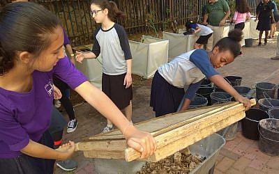 De la terre du mont du Temple criblée dans la ville de Petach Tikva par les élèves du lycée Yeshurun (Crédit : Inbal Dasberg/Projet de criblage du mont du Temple)