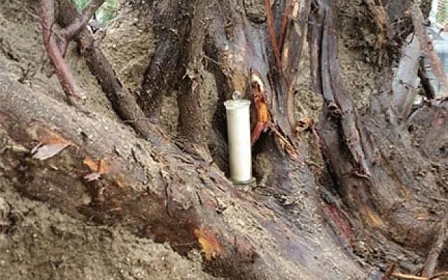 Le pot contenant une copie de 70 ans de la Déclaration d'Indépendance d'Israël a été révélé lorsqu'une tempête a déraciné un arbre au kibboutz Degania Alef dans la vallée du Jourdain, en avril 2018. (Conseil régional de Jordan Valley).
