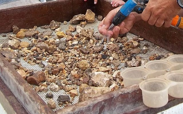 Les bénévoles du projet de criblage du mont du Temple tentent de découvrir des artefacts archéologiques (Crédit : Projet de criblage du mont du Temple)