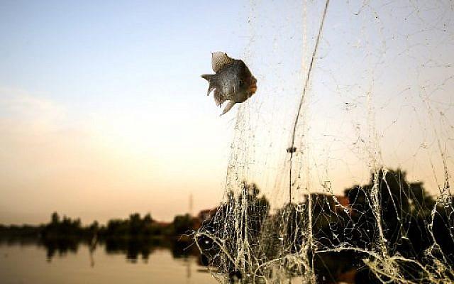 Photo prise le 16 juin 2018 montrant un poisson de la mer pharaonique dans un filet, dans le village de Kafr Fisha. (Crédit : AFP / MOHAMED EL-SHAHED