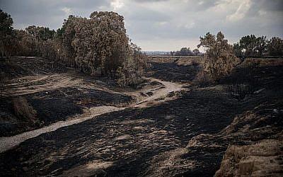 Vue des terres brûlées autour du torrent Besor à Tel Gama, près de la frontière avec la bande de Gaza, le 28 juin 2018. (Hadas Parush/Flash90)