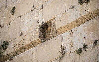 Vue de l'endroit où un gros bloc de pierre s'est détaché du mur Occidental à Jérusalem dans la zone de prière mixte le 23 juillet 2016. (Yonatan Sindel/Flash90)