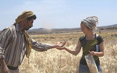 Dr. Amaia Arranz-Otaegui, à droite et Ali Shakaiteer prélèvent des céréales dan la région de Shubayqa, au nord-est de la Jordanie. (Crédit : Joe Roe)