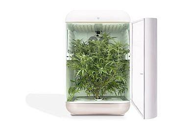 Illustration d'une technologie de culture du cannabis par Seedo. (Crédit : Seedo)