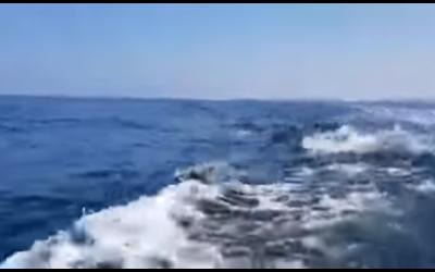Des dauphins au large d'Ashdod. (Capture d'écran : YouTube)