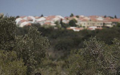 Illustration: les bois près de Zichron Yaakov (Crédit : Hadas Parush/Flash90)