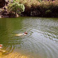 Des personnes nagent dans la rivière Zavitan, le 4 juillet 2006. (Crédit (Phil Sussman /Flash90/File)