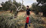 Les habitants du village de Ras Karkar, en Cisjordanie, examinent les oliviers endommagés par des extrémistes israéliens présumés, le 19 août 2018. (Iyad Haddad / B'Tselem)