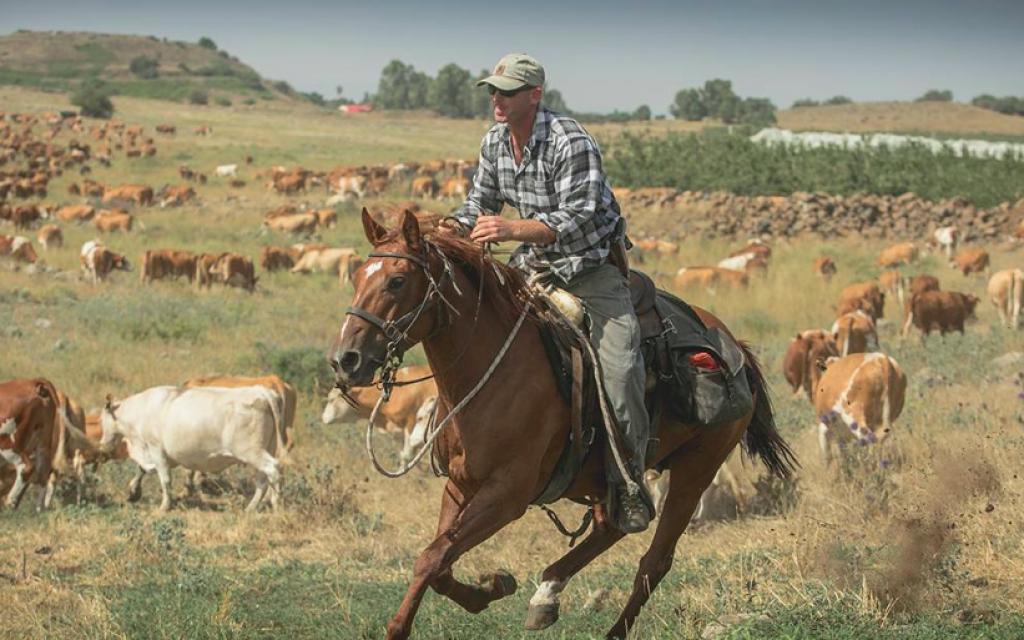 Un éleveur du plateau du Golan rassemblant le troupeau (Avec l'aimable autorisation de MIre Golan)
