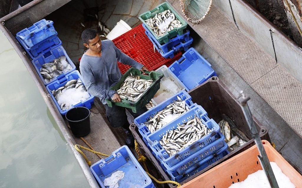 Les produits de la pêche dans le lac de Tibériade, le 8 octobre 2018. (Crédit : JACK GUEZ / AFP)