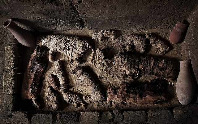 Des chats momifiés retrouvés dans une tombe des pyramides de  Saqqara, le 10 novembre 2018. (Crédit : Nariman El-Mofty/AP)