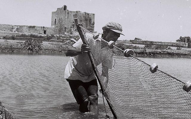 Un pêcheur pose son filet dans un bassin à poissons au port de Kurdani, près de Haïfa (GPO, Public Domain/Wikimedia Commons)