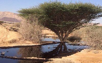 Un déversement de pétrole dans la réserve naturelle d'Arava, dans le sud d'Israël, en 2014. (Crédit : Autorité de la Nature et des Parcs)