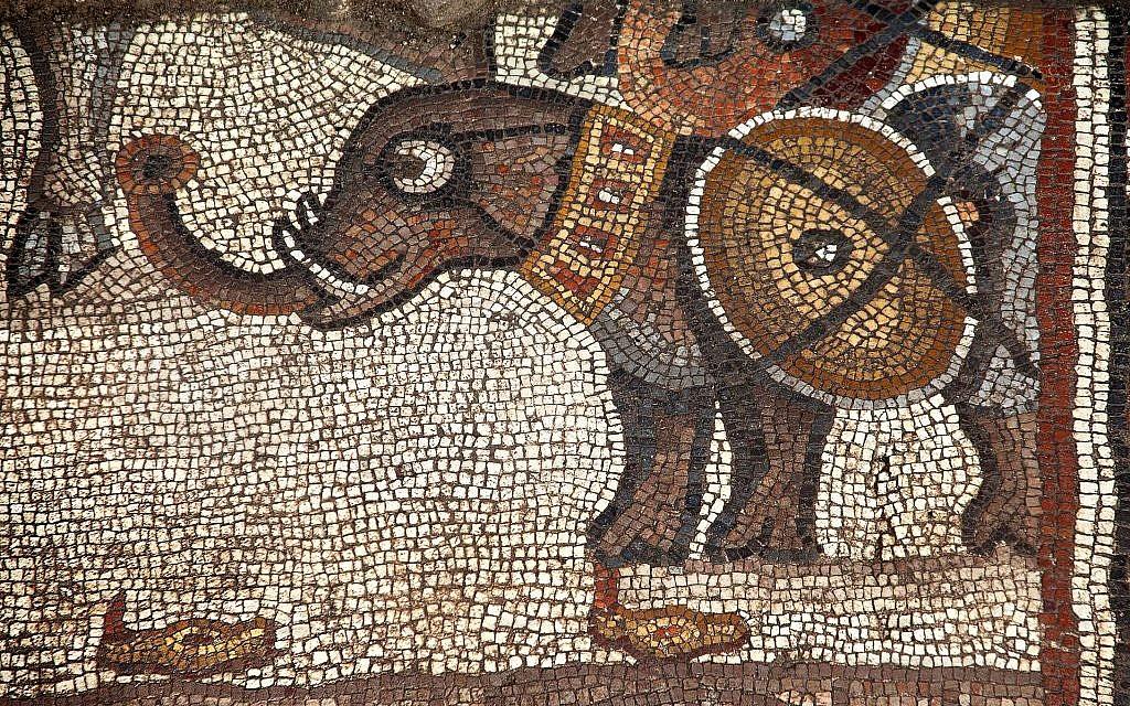 Une mosaïque représentant un éléphant de guerre, dans la synagogue de Huqoq. (Crédit :Jim Haberman)