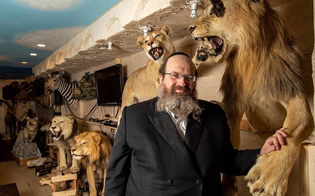 Le rabbin Shaul Shimon Deutsch, fondateur de Torah Animal World, le musée de la ville de New York qui abrite les 1 100 espèces mentionnées dans la Bible et le Talmud. (Micah B. Rubin / Times of Israel)