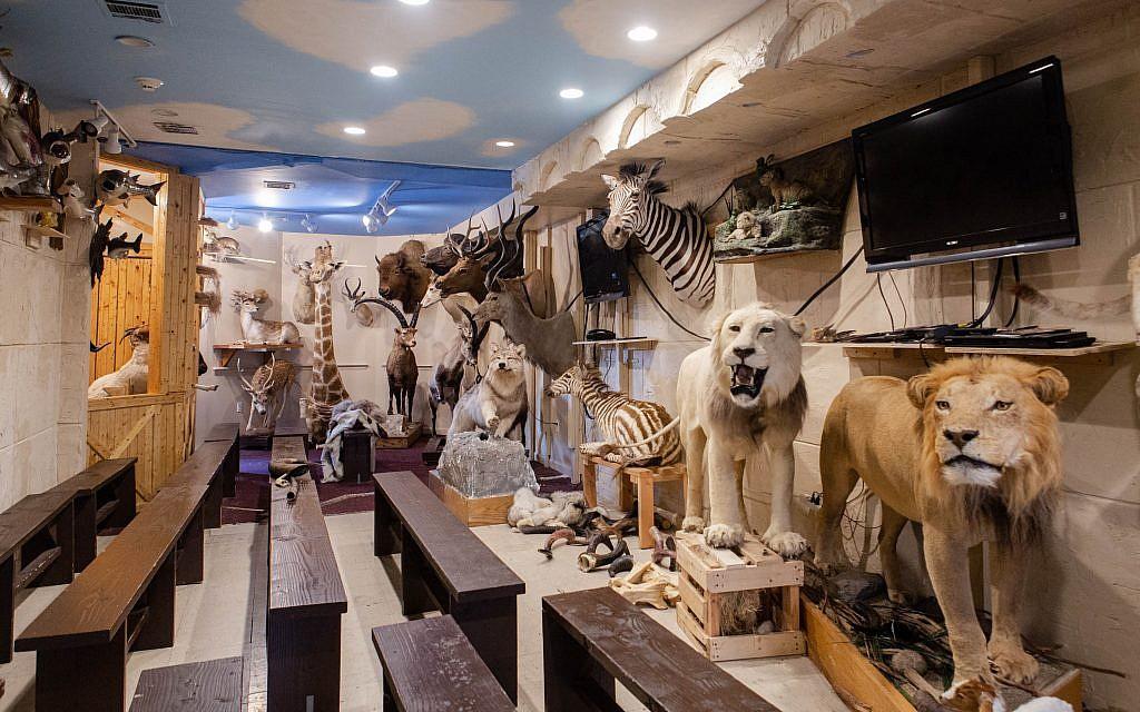 Les 1 100 espèces mentionnées dans la Bible et le Talmud se trouvent au musée Torah Animal World de New York. (Micah B. Rubin / Times of Israel)