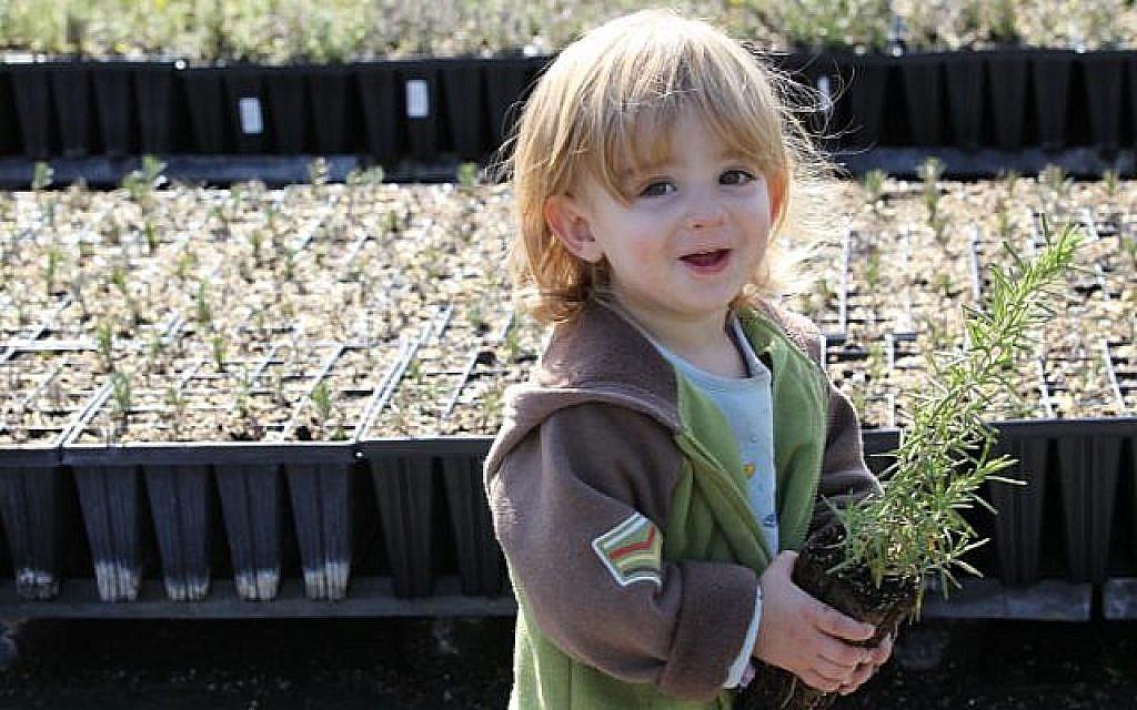 Un tout-petit israélien choisit des semis à planter avant la fête de la nature juive de Tou Bichvat. (Crédit photo : Nati Shohat/Flash90)