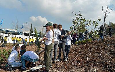 Des enfants israéliens plantent des arbres pour la fête juive de Tou Bichvat, à Haïfa, le 9 février 2017, dans une forêt du KKL-JNF. (Yossi Zeliger/Flash90)